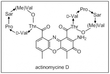 Rédaction-Actinomycine.jpg